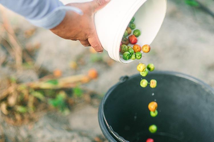 Amway Environment Organic Farms
